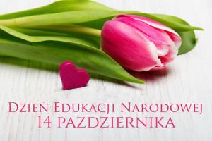 Polish  Teacher's day card. Tulip on white wooden background